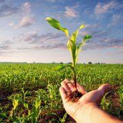 دومین کنفرانس ملی دستاوردهای نوین در زراعت و اصلاح نباتاتدومین کنفرانس ملی دستاوردهای نوین در زراعت و اصلاح نباتات
