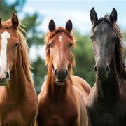 دومین همایش ملی صنعت اسبدومین همایش ملی صنعت اسب